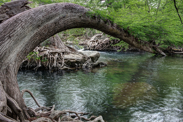 bent tree Guadalupe River