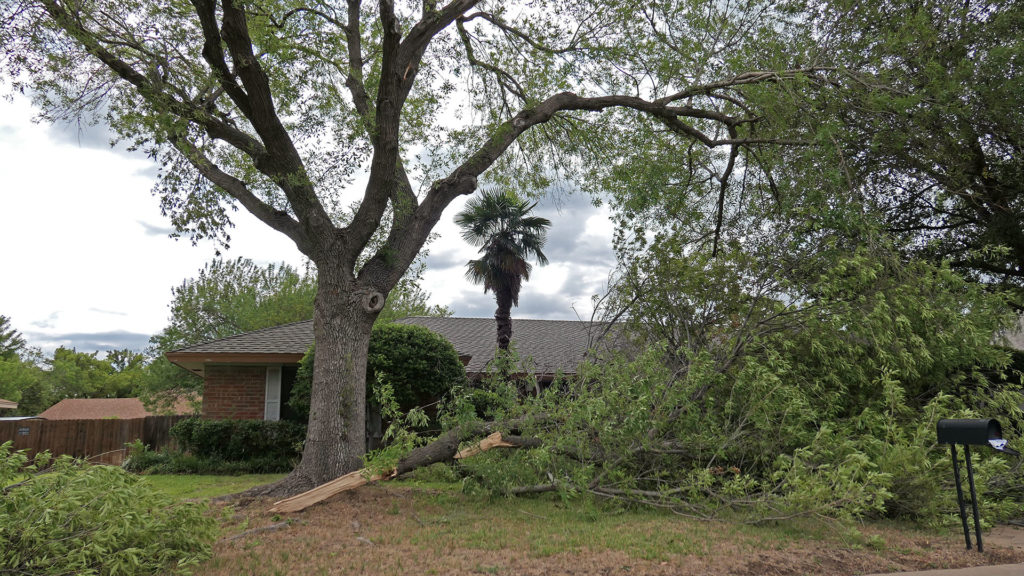 Severe Tree Damage in the Southland area
