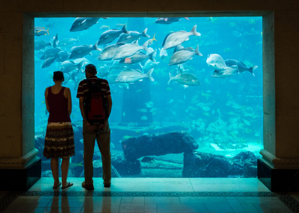 Couple looking into a large aquarium