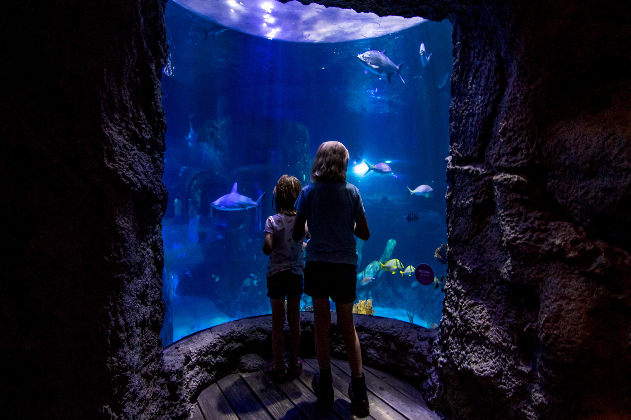 Sea Life Aquarium Rivercenter Mall Opening In Early