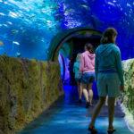 SEA LIFE Walk-through Aquarium