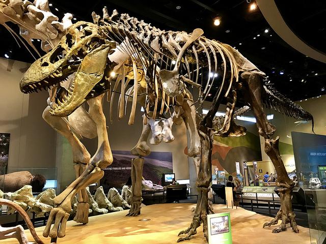 Tyrannosaurus Rex at Perot Museum